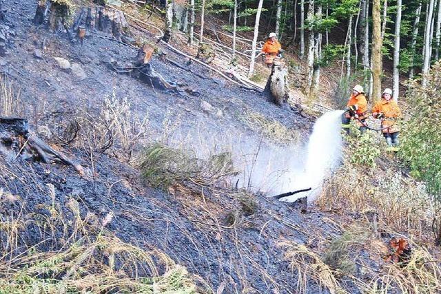Böschungsbrand hätte Waldbrand werden können