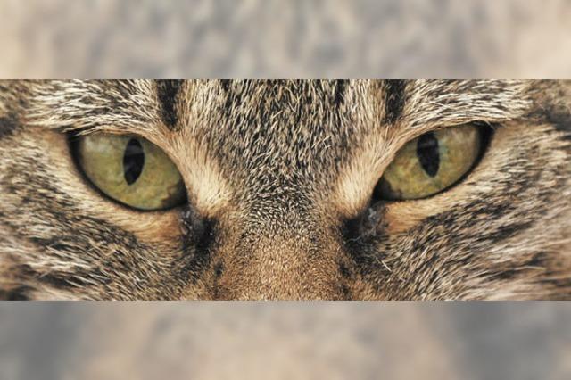 Die Pupillen