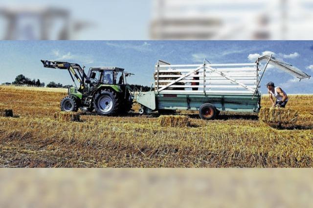Hitze sorgt für Engpass beim Viehfutter