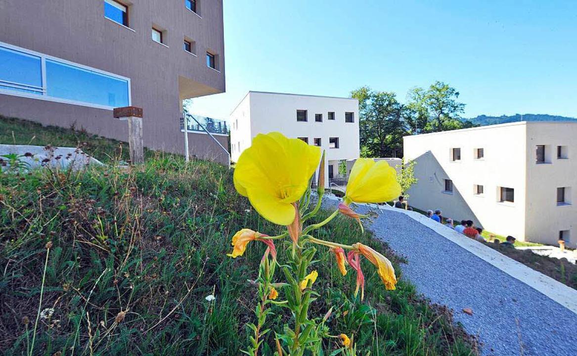 Die neuen Würfelhäuser des Kölner Architekten Peter Kulka polarisieren.  | Foto: Michael Bamberger