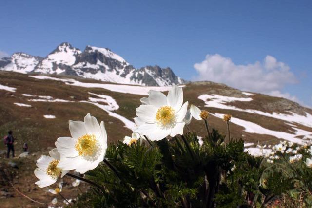 Mann aus Ihringen stürzt in Südtirol in den Tod