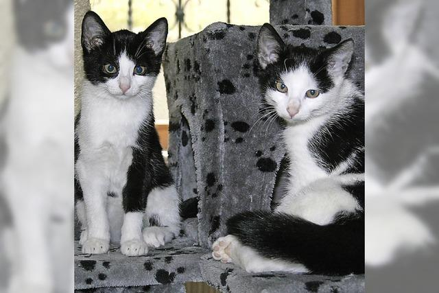 Tierschutzverein übernimmt zwölf Katzen aus Privathaushalt
