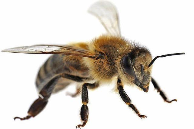 Ohne Fleiß kein Honig: Mitglieder der Bienen-Coop arbeiten solidarisch