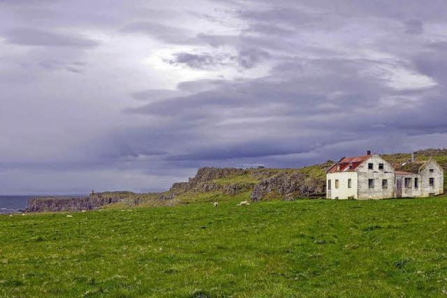 Pferdezucht auf Island