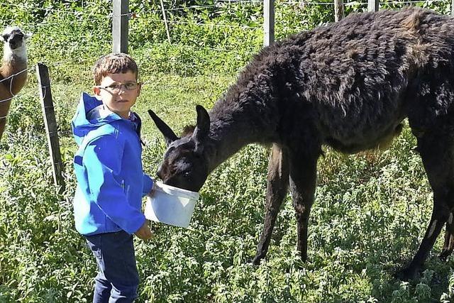 Haustiere aus den Anden persönlich kennenlernen