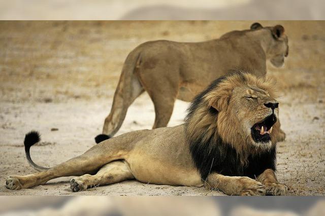 Großwildjäger finanzieren den Tierschutz in Afrika