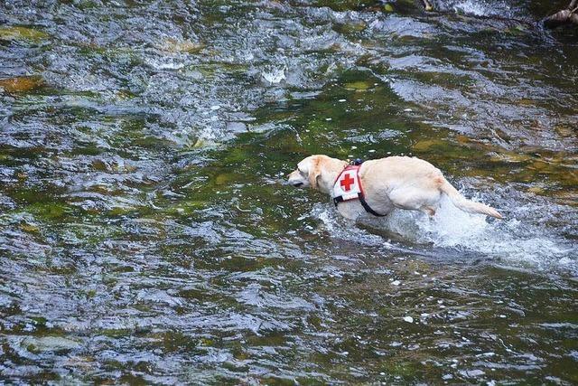Hunde stellen Rettungsaktion in der Wutach nach für Dokumentarfilm