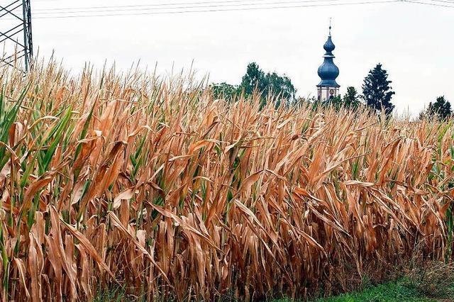 Trockenheit macht es den Landwirten schwer
