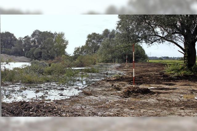 Rodungen am Vogelsee dienen dem Naturschutz