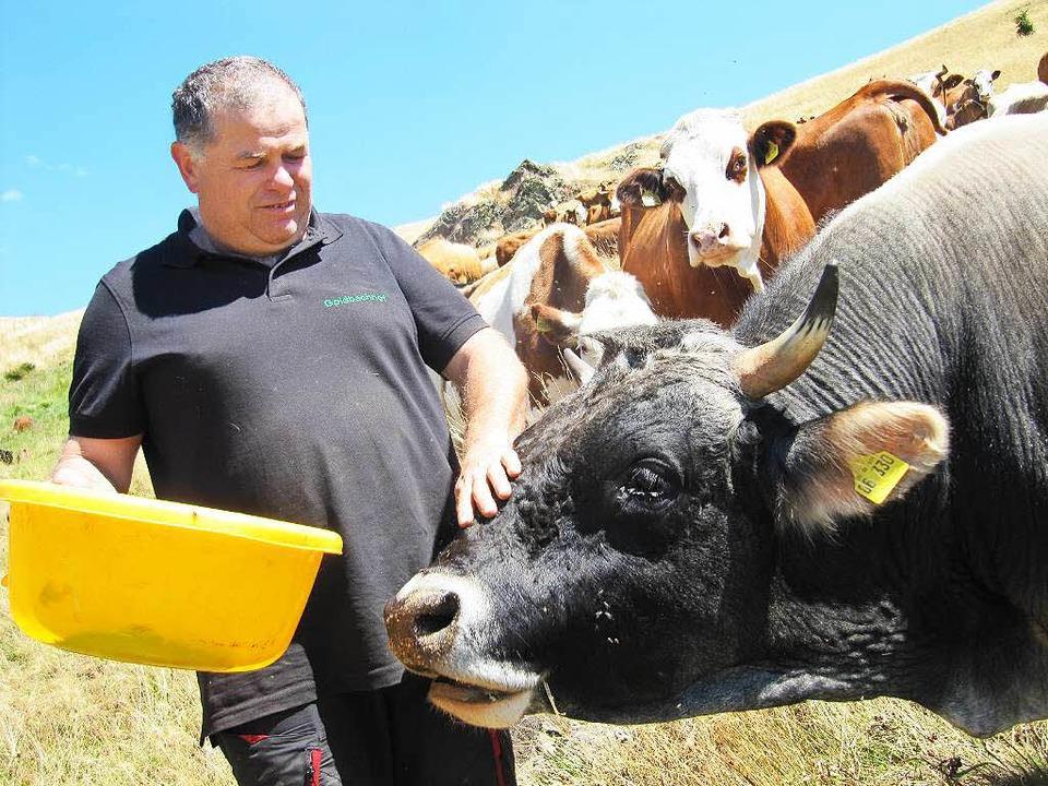 Statt Milch verkaufen Bauern wie Marku...vom Goldbachhof in Bernau das Fleisch.  | Foto: Susanne Filz
