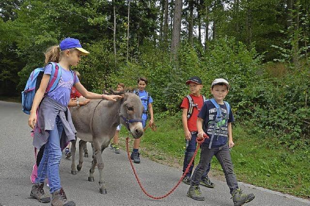 Mit den Eseln auf Tour