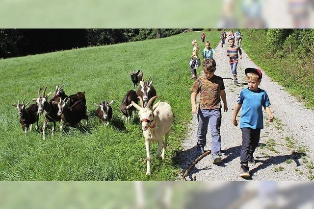 Wenn eine Ziege gerufen wird, kommen alle zurück