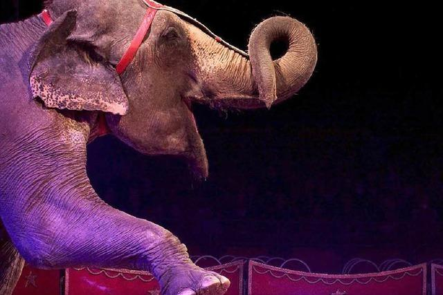 Zirkus Knie kommt mit 100 Tieren – das freut nicht alle