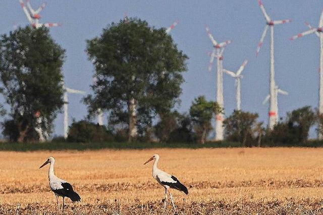 Neue Windkraftkapazitäten sollen versteigert werden