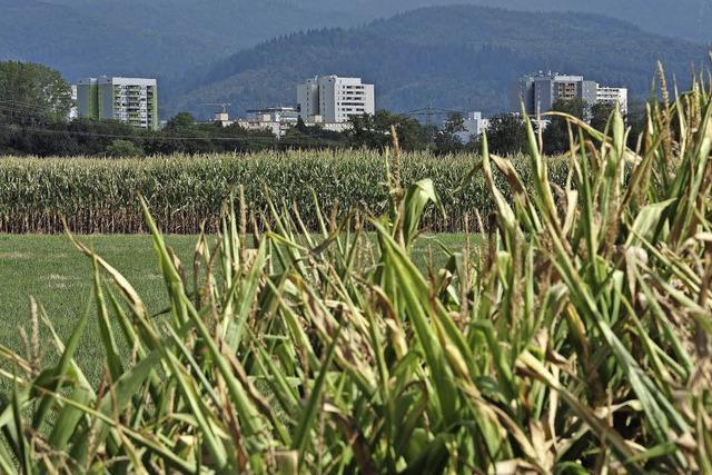 Freiburgs Ausgleichsflächen reichen für große Bauprojekte nicht aus