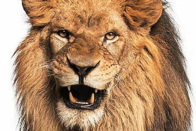 Pro & Contra: Gehören wilde Tiere in den Zirkus?