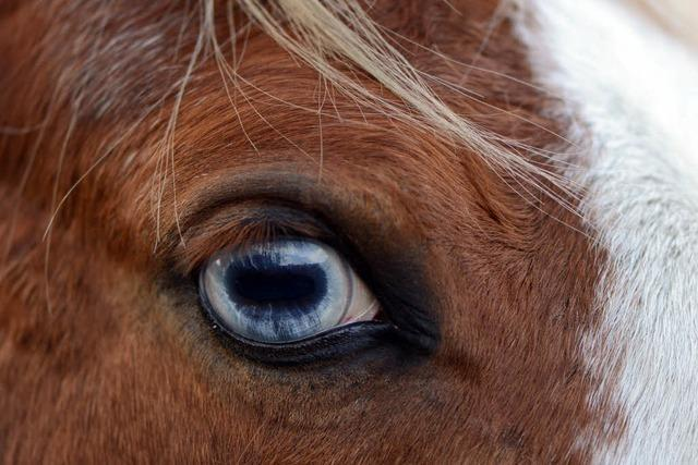 Unbekannter misshandelt Shetlandpony schwer