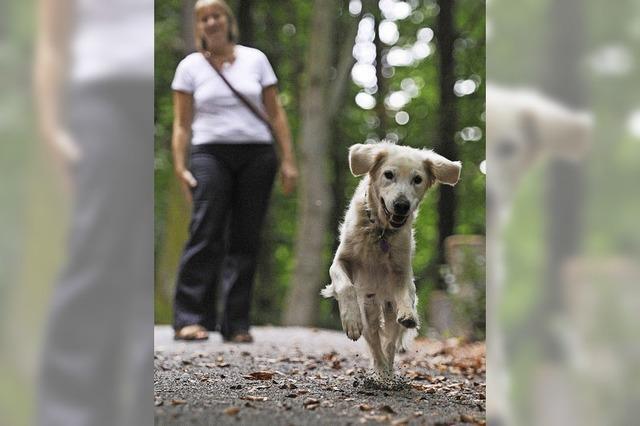 """Faltblatt """"Hunde im Naturschutzgebiet"""": Appell an Besitzer"""