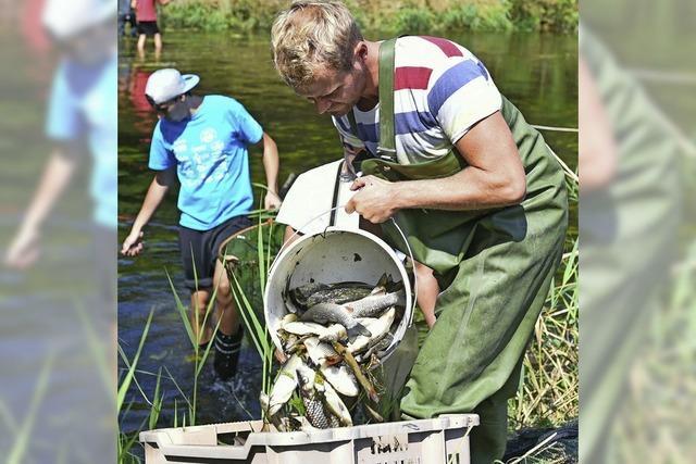 Tausende Fische vergiftet