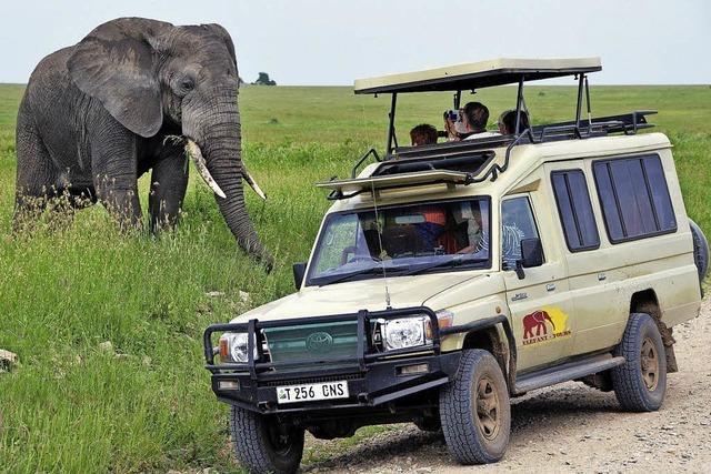 Löwe reißt Ranger, Elefant läuft Amok