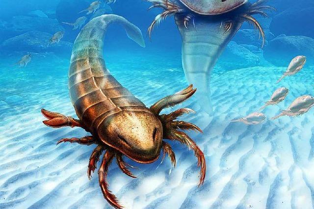 Forscher entdecken Überreste eines Riesen-Skorpions