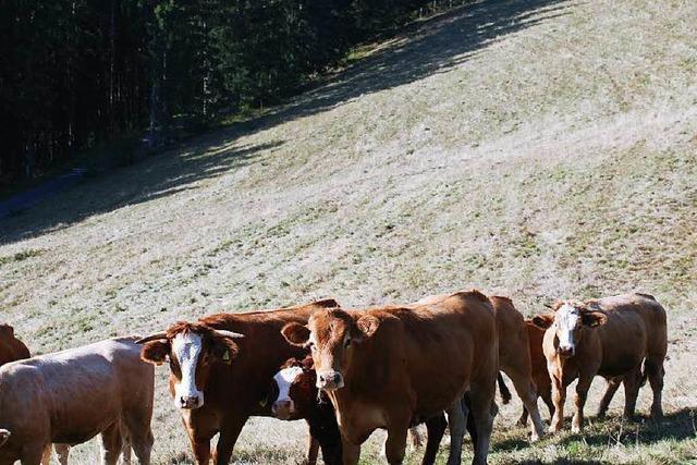 Dürre: Schwarzwaldbauern geht das Futter aus