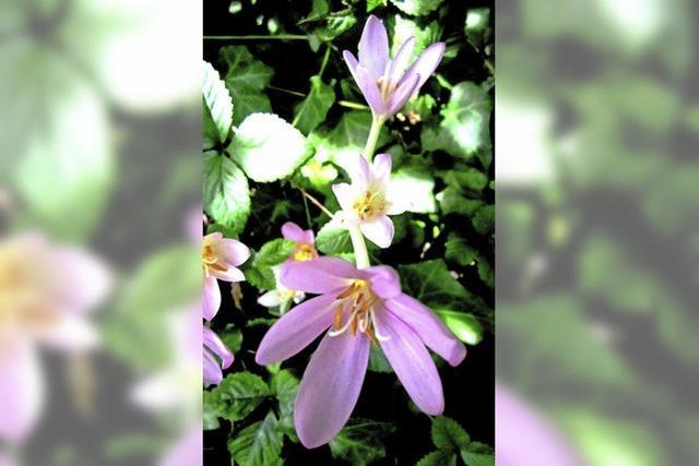Vornehm lila