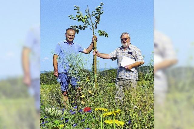 Blumenwiese schließt eine Biotoplücke