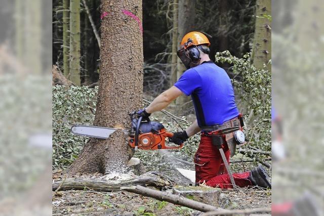 Hitze macht dem Wald zu schaffen