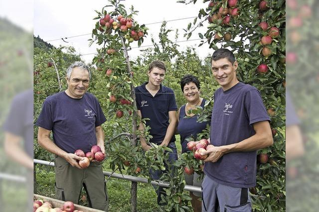 Knallrote Gala-Äpfel