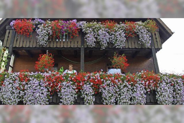 96 Balkonpflanzen schlucken bis zu 200 Liter Wasser am Tag