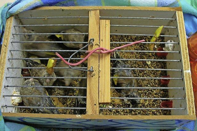 Geschützte Vögel aus Tunesien eingeführt