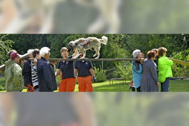 Rettungshunde versetzen in Staunen
