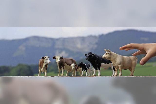 Ferientage im Rhythmus des Milchviehs