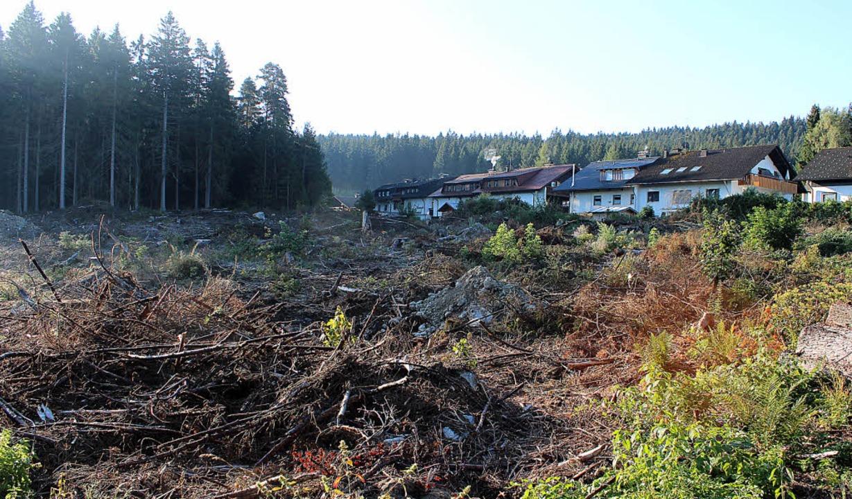 Zahlreiche Bäume mussten bei der Tenni...er beginnen, ihr Domizil zu errichten.  | Foto: Joachim Frommherz
