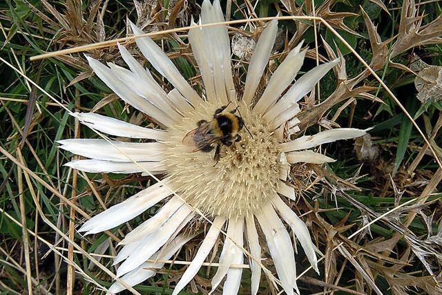 Kulturgeschichte der Bienen begeistern