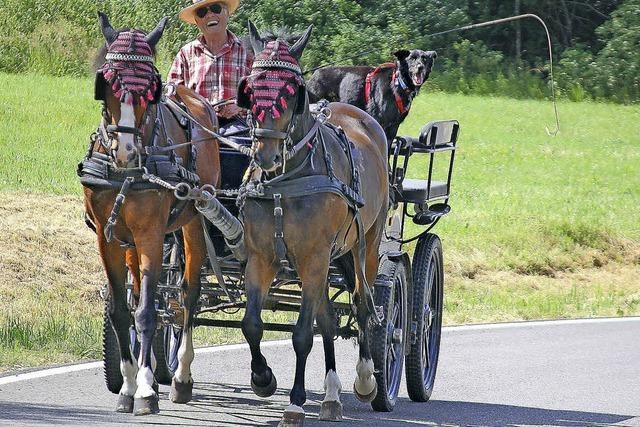 Pferde sind sein Leben