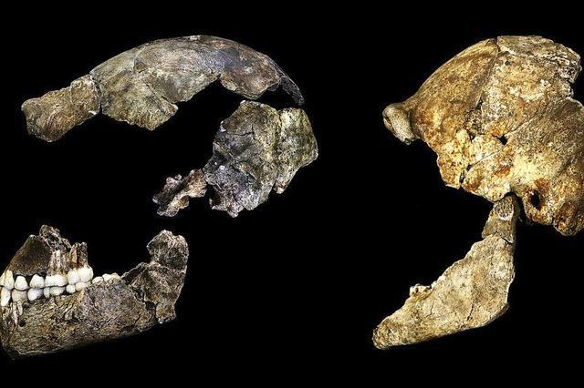 Alte Knochen und Schädel