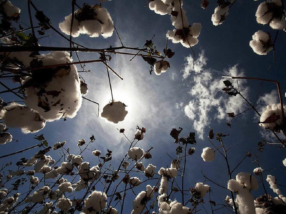 Kein Schnee, sondern Baumwolle  | Foto: dpa
