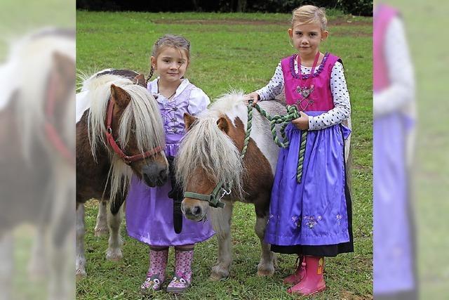 Pferdesport ganz kurzweilig