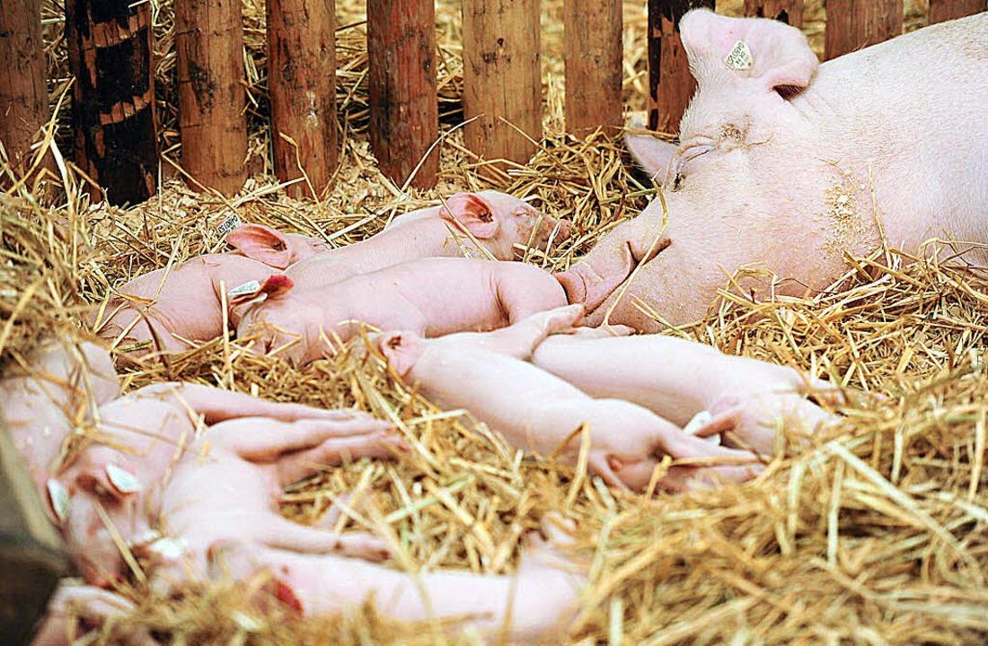 Am Donnerstag ist  Tag der Tierzucht auf der Baden-Messe.  | Foto: Dakov