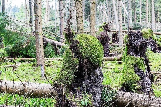 Forstamt liefert wohl falsche Daten zur Holzmenge