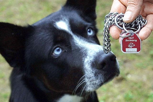 Wunsch: Extrasteuer für Kampfhunde