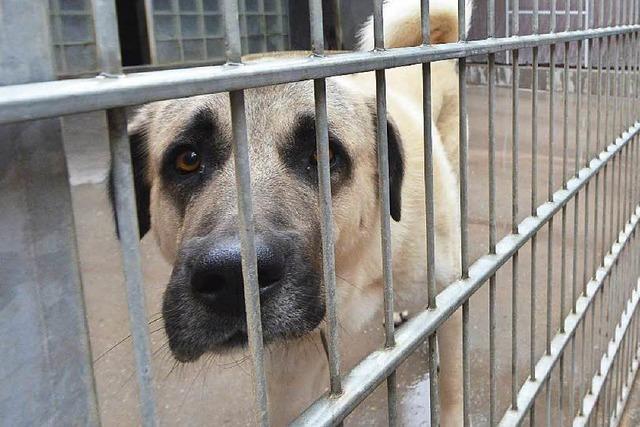 Tierheime im Landkreis: Finanzierung wird schwieriger