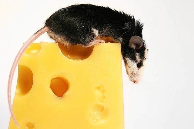 Schlimmer Hunger – Einbrecher stiehlt Wurst und Käse