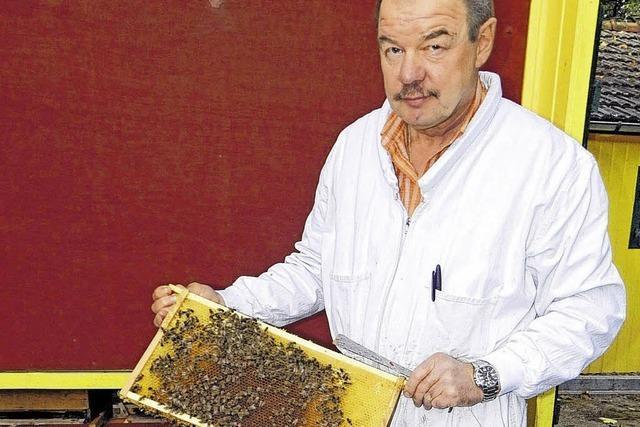 Honig in hoher Qualität