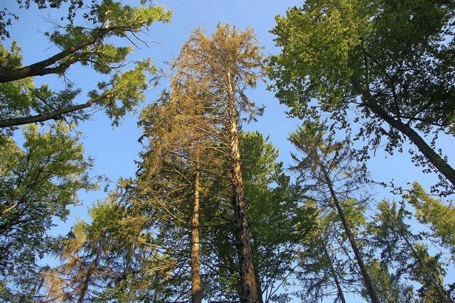 Eichsler Wald wird verjüngt