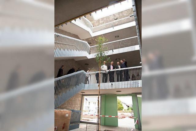 Ein Baum im Treppenhaus