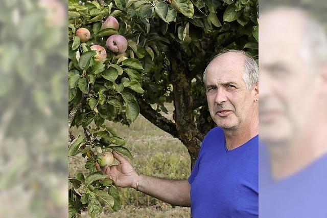 Apfelernte bringt nur halben Ertrag