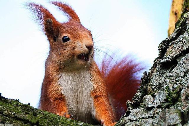 Viele Säugetiere bevorzugen das Single-Dasein